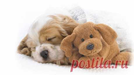 Спящий щеночек и мягкая игрушка обои 1920x1080.