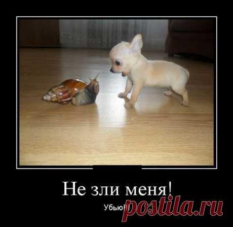 Демотиваторы (21 картинка) - Нет скуки.ру - Хорошего настроения от просмотра очередной подборки демотиваторов.