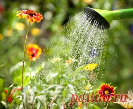Клумба на солнцепеке: какие цветы смогут расти на сухом и солнечном участке | Прочие многолетники (Огород.ru)