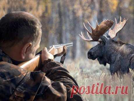 В России увеличат штраф за уничтожение редких животных | nashi-pitomcy.ru