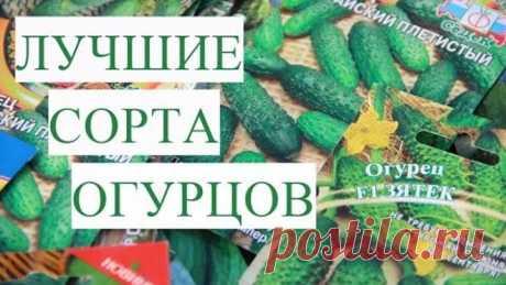 Лучшие Урожайные Сорта Огурцов. Мои Предпочтения.