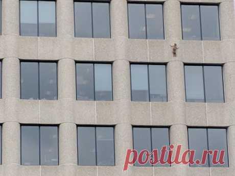 Енот совершил прыжок веры с 9 этажа, возомнив себя ассасином