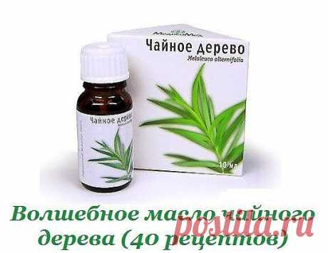 Волшебное масло чайного дерева: 40 рецептов для красоты и здоровья | Всегда в форме!