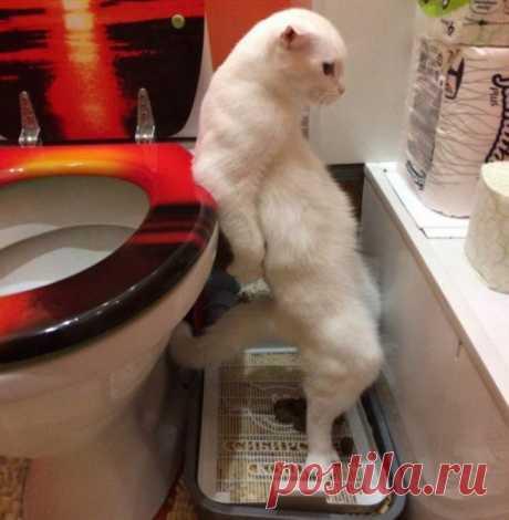 25 смешных фото котов, которые выведут весь негатив из организма!