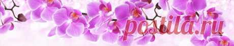 Розовые орхидеи для кухни.