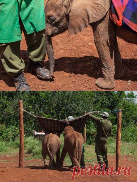Слоновий приют в Кении : НОВОСТИ В ФОТОГРАФИЯХ