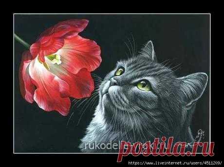 Кот с тюльпаном. Вышивка крестом.