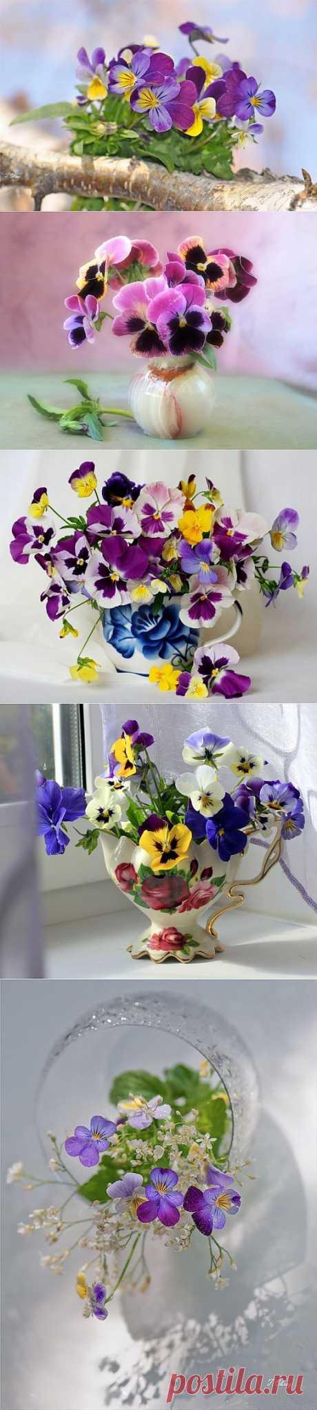 Натюрморт Анютины глазки. Теплым и солнечным, радостным летом  синим и белым, и смешанным цветом, шепчут весёлые, яркие сказки эти цветочки АНЮТИНЫ ГЛАЗКИ.  Бабочек, синих и жёлтых, и белых много на клумбу цветочную село. Сами узнаете их без подсказки это цветочки - АНЮТИНЫ ГЛАЗКИ О. Огланова
