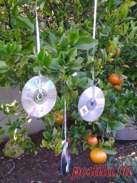 15 простых способов эффективной защиты от вредных и назойливых насекомых...