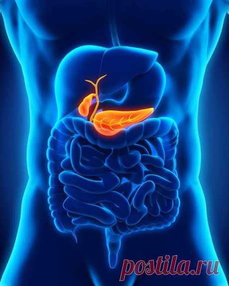 Что необходимо для нормального оттока желчи Какие функции выполняет желчь в организме? Многие люди страдают дисбактериозом – нарушением баланса правильной и патогенной микрофлоры.