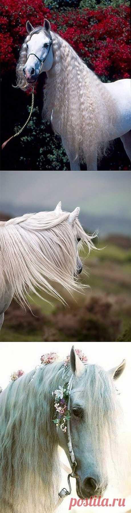 Лошади прямиком из сказки