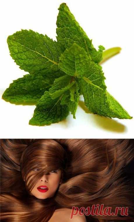Эфирное масло мяты для шикарных волос