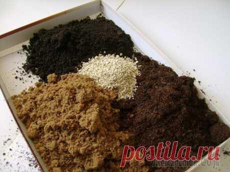 La composición de las mezclas de tierra para las plantas de salón
