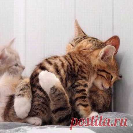 - Мам, ну пусти...там за мной какие-то хозяева пришли - Подожди, сыночек, дай я тебя еще раз обниму...