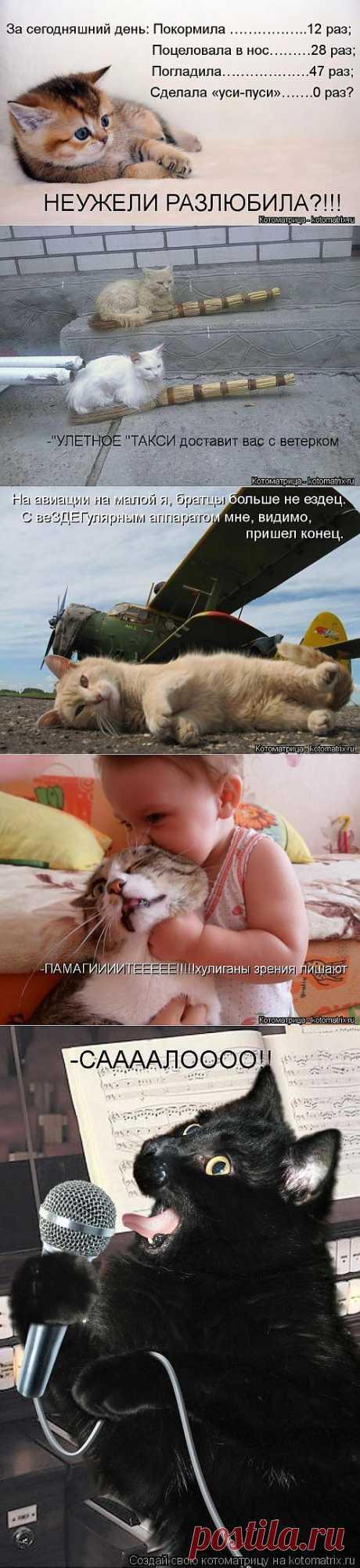 Смешные факты о животных и любимая котоматрица.