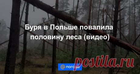 18-7-21-Буря в Польше повалила половину леса (видео) Страну охватили аномальные грозы.