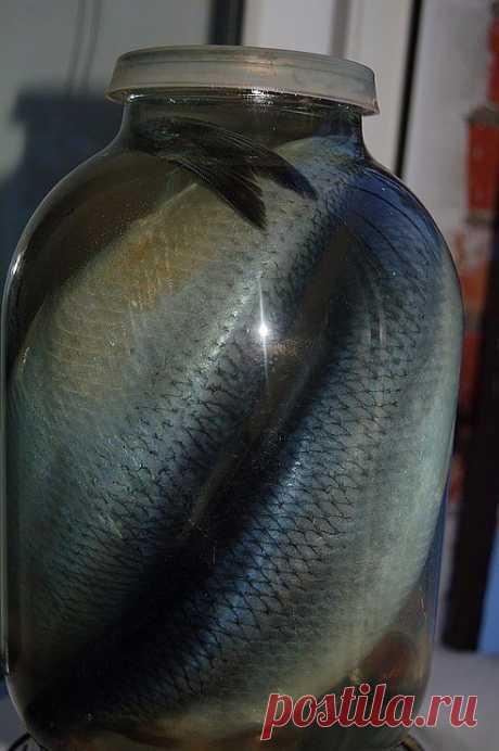 Наша семья уже давно не покупает соленую скумбрию или селедку в магазине, домашняя засолка намного вкуснее, да и безопастнее. Потрясающая рыбка получается! Хочется еще, и еще... Рекомендую! Ингредиенты:  1 кг скумбрии ИЛИ селедки 0,5 литра воды 2 столовые ложки соли 1 столовая ложка сахара Лавровый лист и черный перец горошком Рецепт приготовления:  Налить воду в кастрюлю и поставить на огонь. Добавить соль и сахар, довести до кипения. Добавить лавровый лист и черный перец...