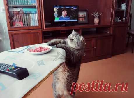 Смешные животные: осень дома. Подборка забавных фото | уДачная жизнь | Яндекс Дзен