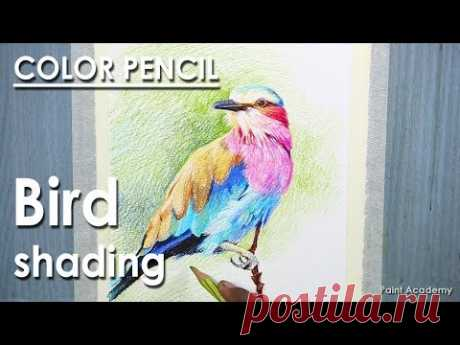 Lilac-breasted roller Bird Drawing : Realistic Color Pencil Shading