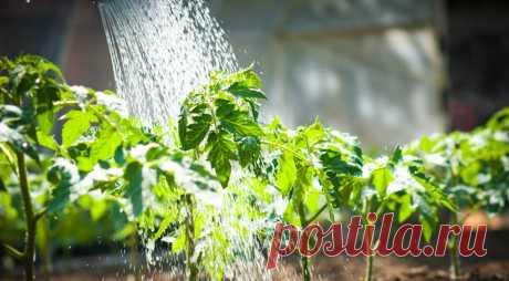 Как поливать растения в теплице на Supersadovnik.ru