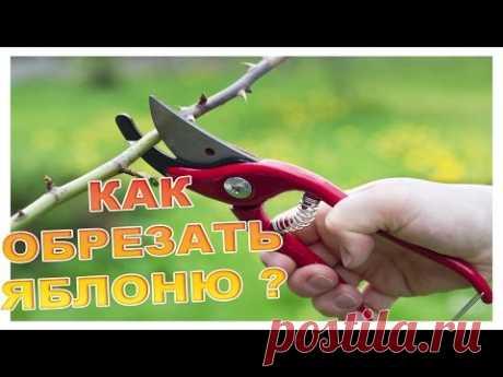 Как качественно обрезать Яблоню ? - YouTube