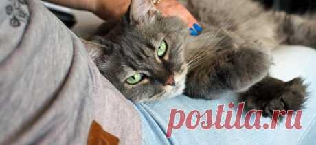 Как приручить дикую кошку | PetTips