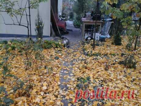 Осень, Тишка загрустил, скоро в город отвезут...