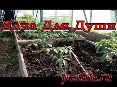 """10 """"НЕЛЬЗЯ"""" при выращивании ТОМАТОВ - YouTube"""