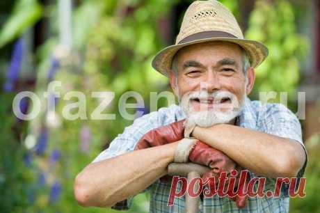 Нет сорнякам между клумбами, грядками и дорожками! | О Фазенде. Загородная жизнь | Яндекс Дзен