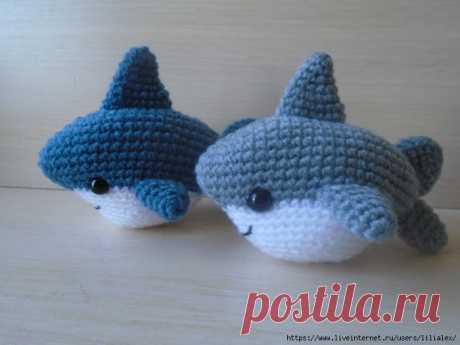 Маленькая дружелюбная акула