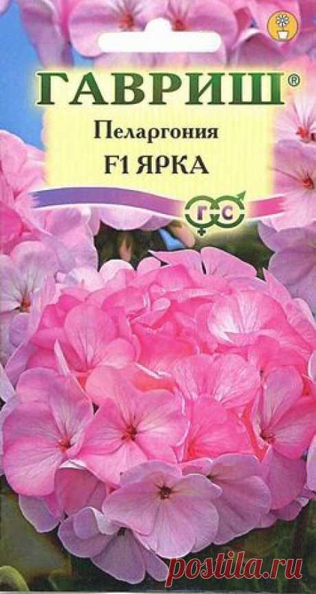 """Пеларгония зональная """"Ярка F1"""""""