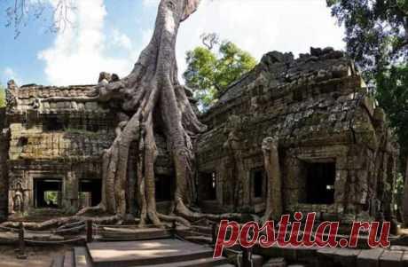 Камбоджийский храм Та Пром (25 фото) . Тут забавно !!!