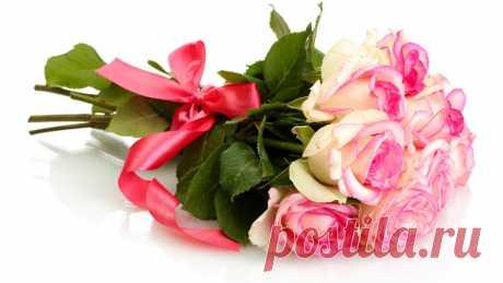 cvety-rozy-buket-rozovye-rozy-1835.jpg (1366×768)