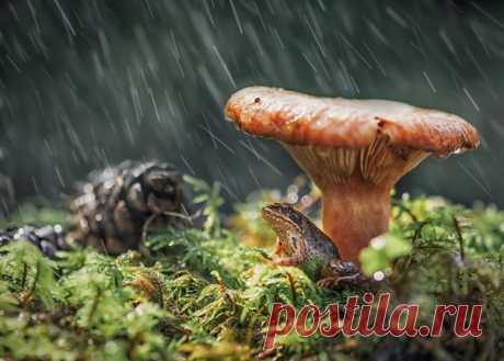 Под зонтиком. Автор фото – Анастасия Третьякова: nat-geo.ru/community/user/221743/