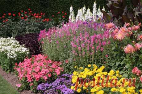 Клумба, которая цветет все лето   6 соток
