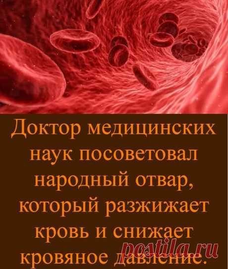Доктор медицинских наук посоветовал народный отвар, который разжижает кровь и снижает кровяное давление.