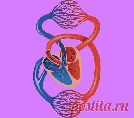 Упражнения которые нужно делать для улучшения кровообращения ног и тазовой области. 3 доступных упражнения.   health and beauty   Яндекс Дзен