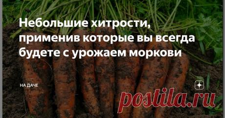 Небольшие хитрости, применив которые вы всегда будете с урожаем моркови Трудно представить огород без веселой зелени стройных рядков моркови? Витаминная, незаменимая, солнечная, простая в уходе, эта королева корнеплодов нуждается в правильном, своевременном «старте» и хотя бы минимальном внимании. Ухаживать нужно не столько за самой морковью, сколько за почвой, в которой она растет, формируется, вызревает. Выбрав сорта по вкусу и потребности, позаботившись о нескольких важ...