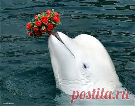Suzdaleva Ekaterina — «Белый кит» на Яндекс.Фотках