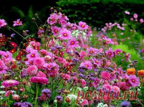 WHAT FLOWERS CAN BE SOWED TOWARDS THE WINTER \u000d\u000a\u000d\u000aThe flowers planted towards the winter will differ in the good growth, resistance to diseases and weather conditions. It is checked! \u000d\u000aTo look completely...