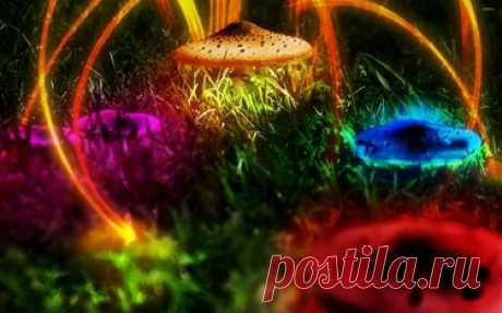 Colorful mushrooms wallpaper - 800621 в Яндекс.Коллекциях