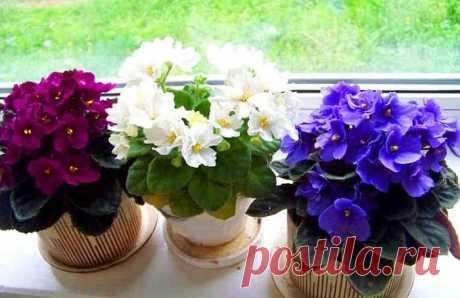 Три простых трюка для здоровья и красоты комнатных растений. Они оживут и зацветут! Комнатные растения украсят любой интерьер. Без них наши жилища кажутся совсем не такими уютными и милыми. Но только в одном случае, если комнатные растения здоровы и хорошо себя чувствуют: тогда они выглядят прекрасно и радуют глаз.  Но если ваше комнатное растение стало вялым, если у него поникши