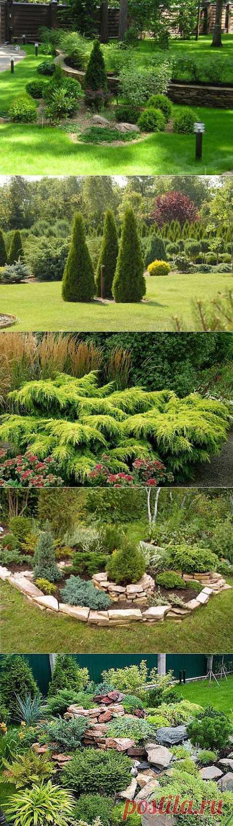 Хвойные растения как искусство создания приусадебного участка.