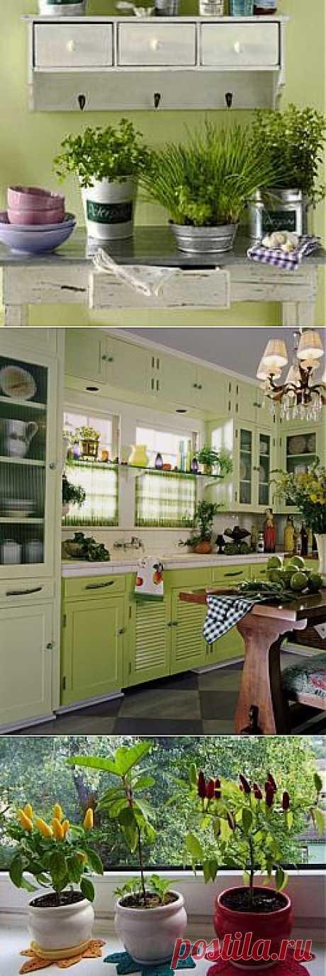 Растения для кухни, комнатные растения в интерьере кухни фото | семиделка.ру