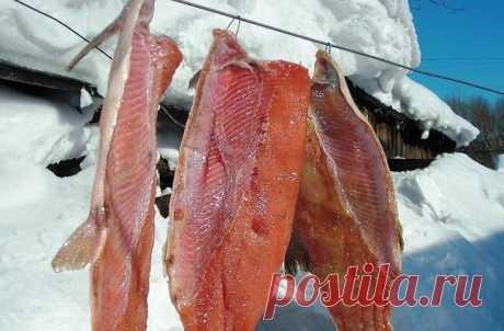 Засолка рыбы якутским способом. Вкуснее не бывает   MASTER-FISHER.RU   Яндекс Дзен
