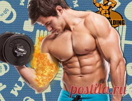 Как я сжигаю ненужные мышцы во время тренировок? Моя инструкция | Путь к совершенству | Яндекс Дзен