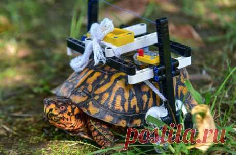 В зоопарке Мэриленда нашли нетривиальный способ помочь животному