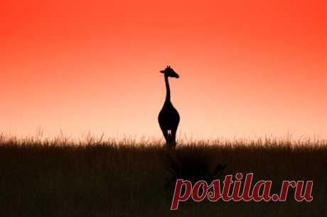 «Грация». Национальный парк Водопад Мёрчисон, Уганда. Автор фото — Владислав Бельченко: