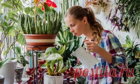 Комнатные растения: советы по уходу для начинающих цветоводов