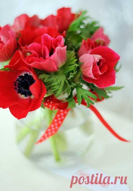 (19) цветы для друзей